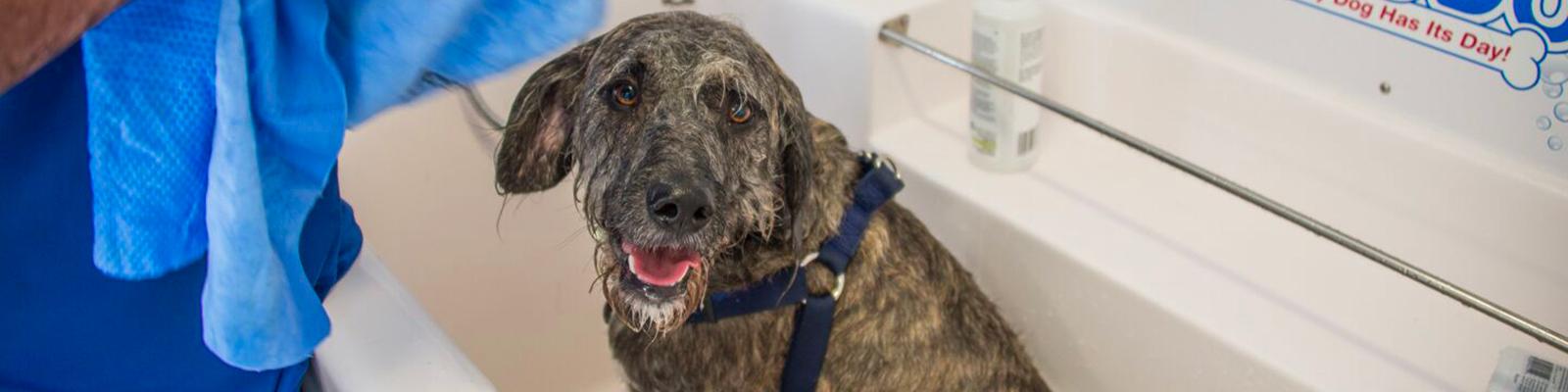 Hydrodog Dog Mobile Grooming Hero Image