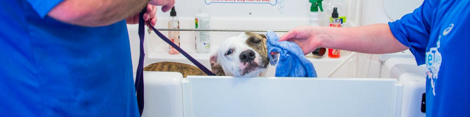 Hydrodog Mobile Dog Grooming Washing Service Hero Image